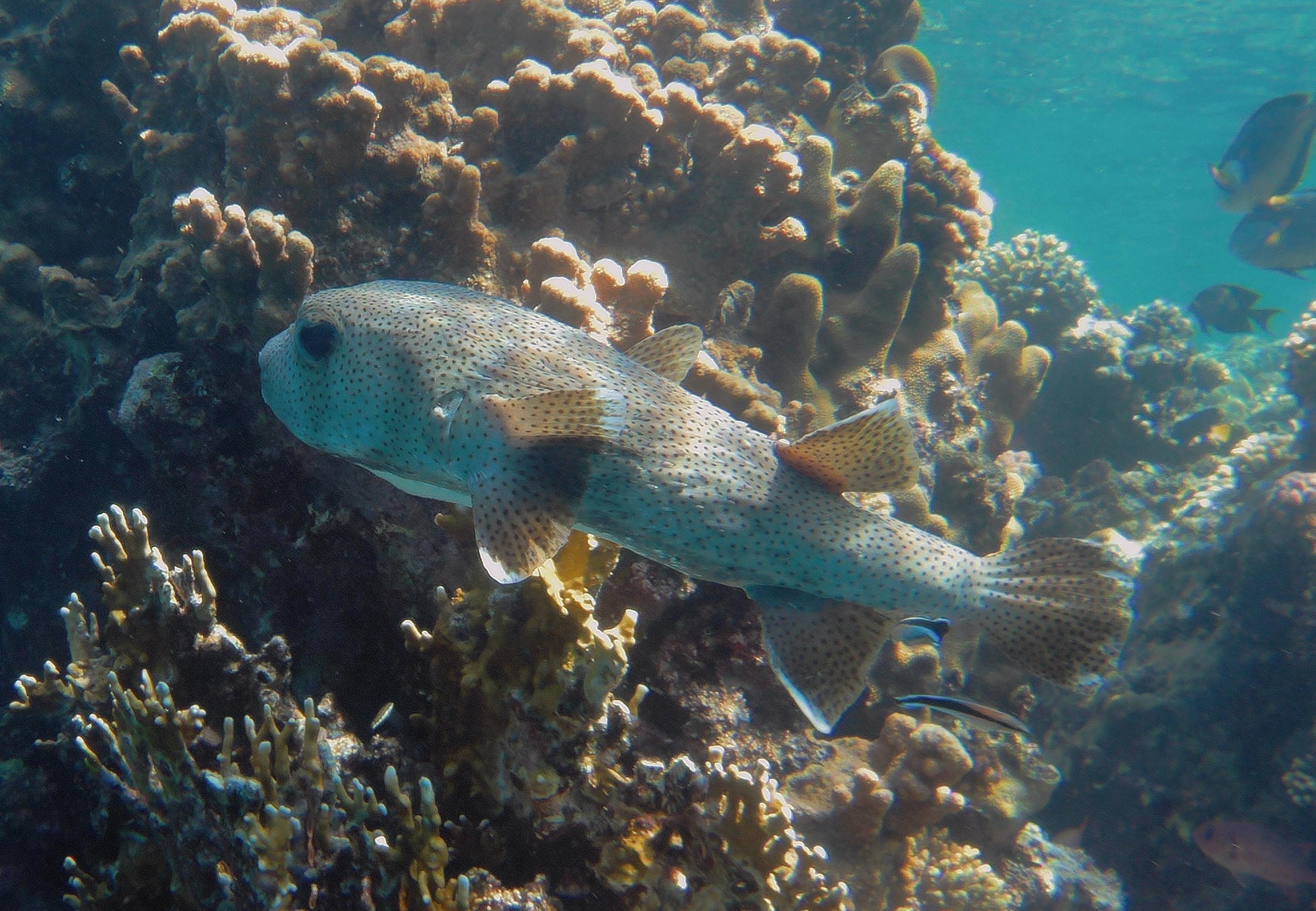 Schnorcheln – Coraya Bay und Umgebung 2018